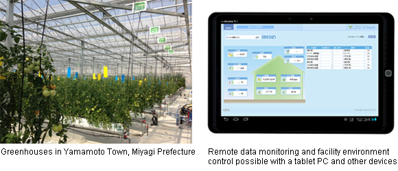 Supporting High-Quality, High-Productivity Greenhouse Horticulture with
