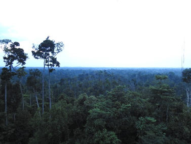 The Hutan Harapan rainforest