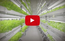 Connected Lettuce video
