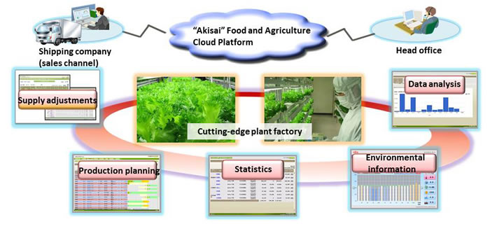 How Akisai is used in the plant factory