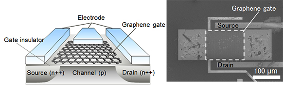Figure 2: The newly developed graphene gate sensor, a schematic (left), and a scanning electron microscope image (right) of the produced sensor