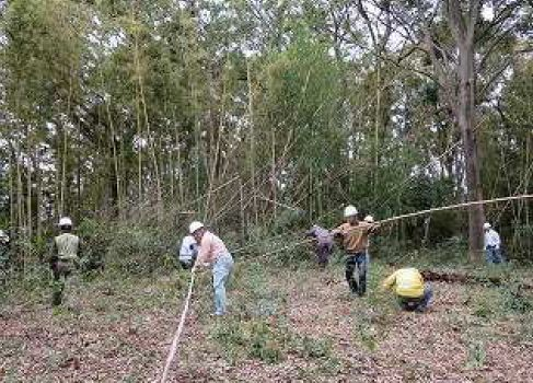 Bamboo grove cutting work