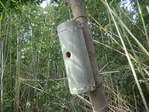 Installed nest boxes made from bamboo