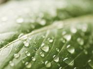 Экологичные ИТ-системы